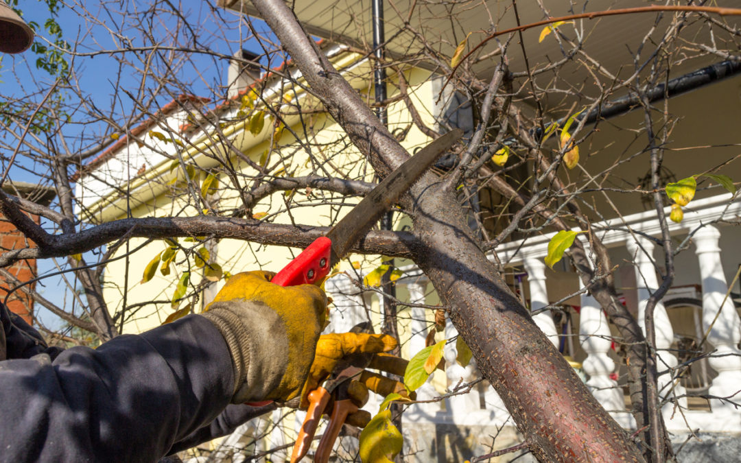 5 Steps to Prepare Your Garden for Winter